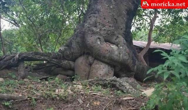 Fa szaporodása
