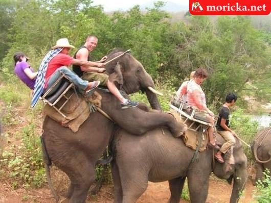 Elefánton túra